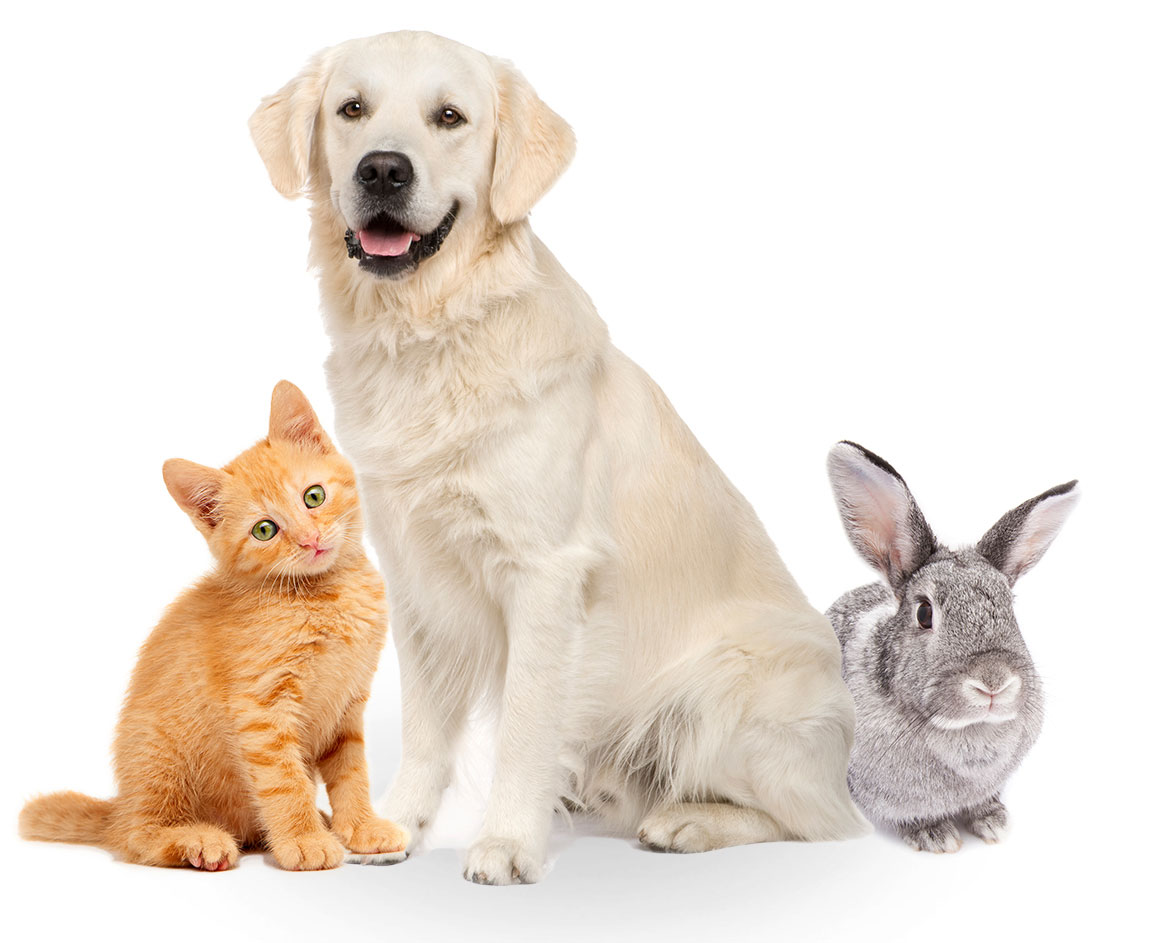 Best Pet Wet Food Gives Nutritional Requirements to a Pooch