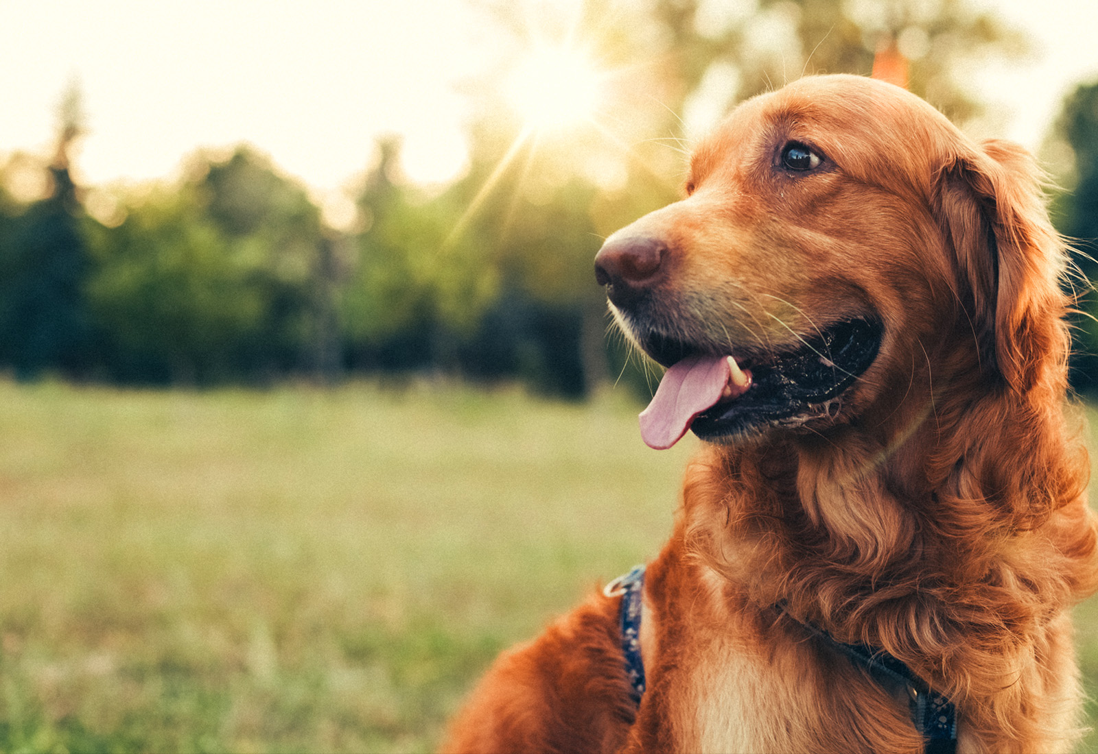 Can You Transform Your Pet Into a Service Dog?