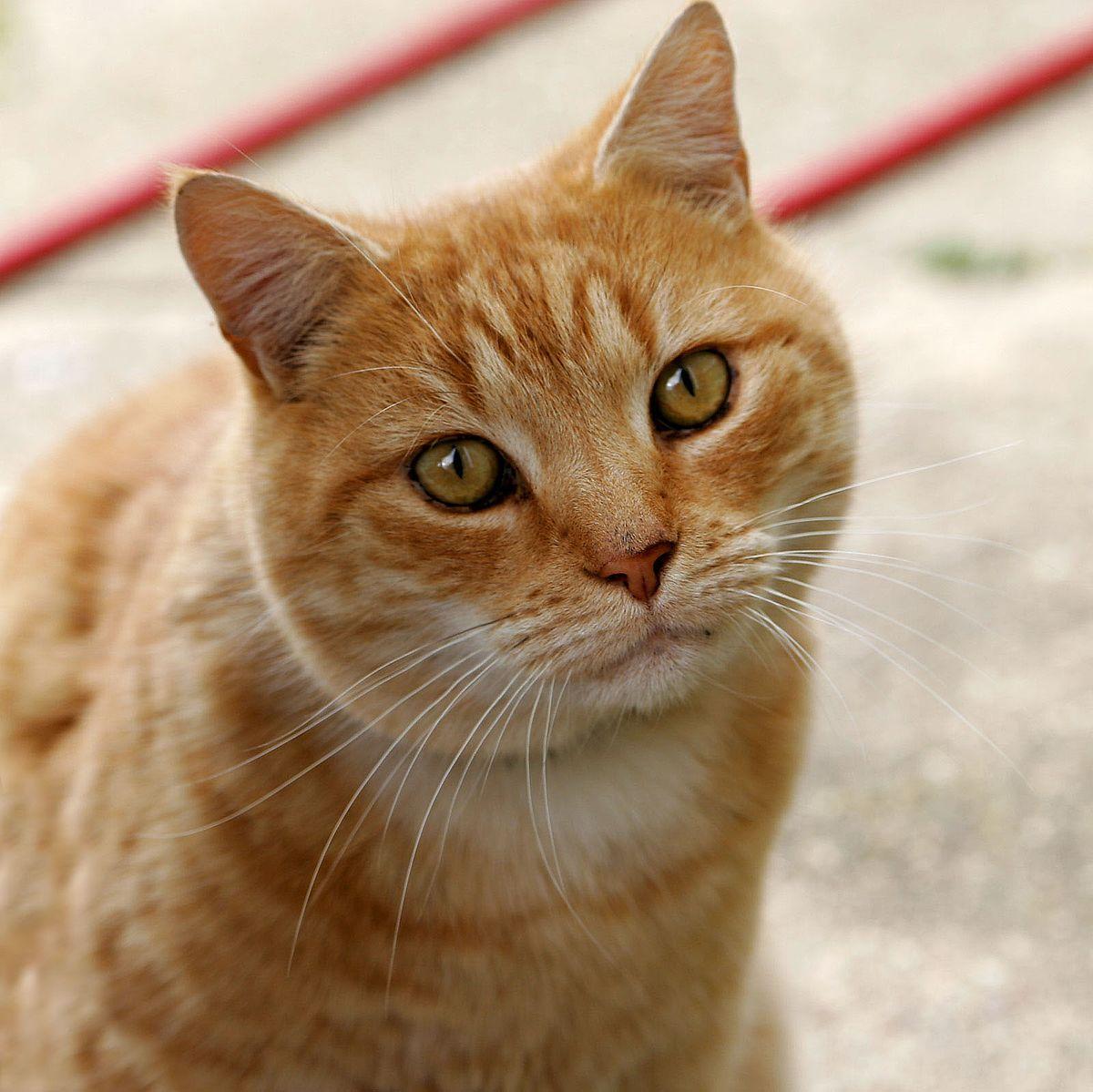 Cat Litter- Sorting The Best One For Your Little Kitten