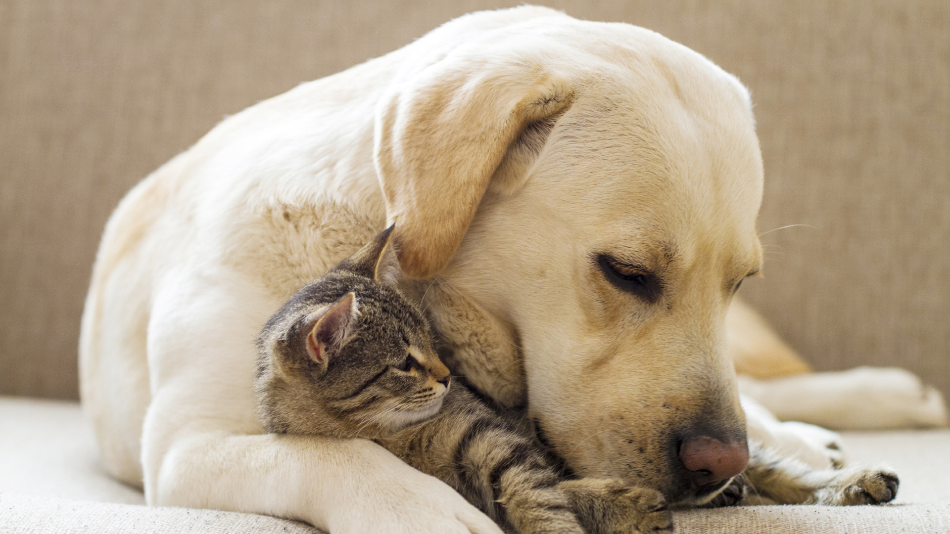Get All Your Pet Stuff - Shop For Pet Products Online