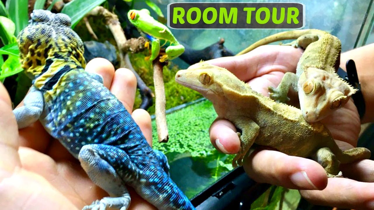 History And Habitat About Rainforest Animals