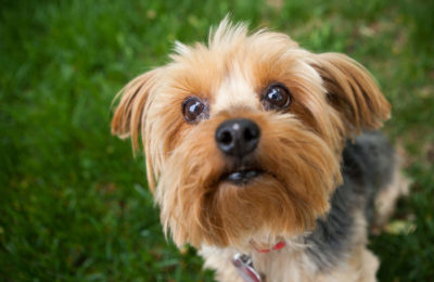 Jackson Galaxy Pet Toys Erased Violation of Livid Pets
