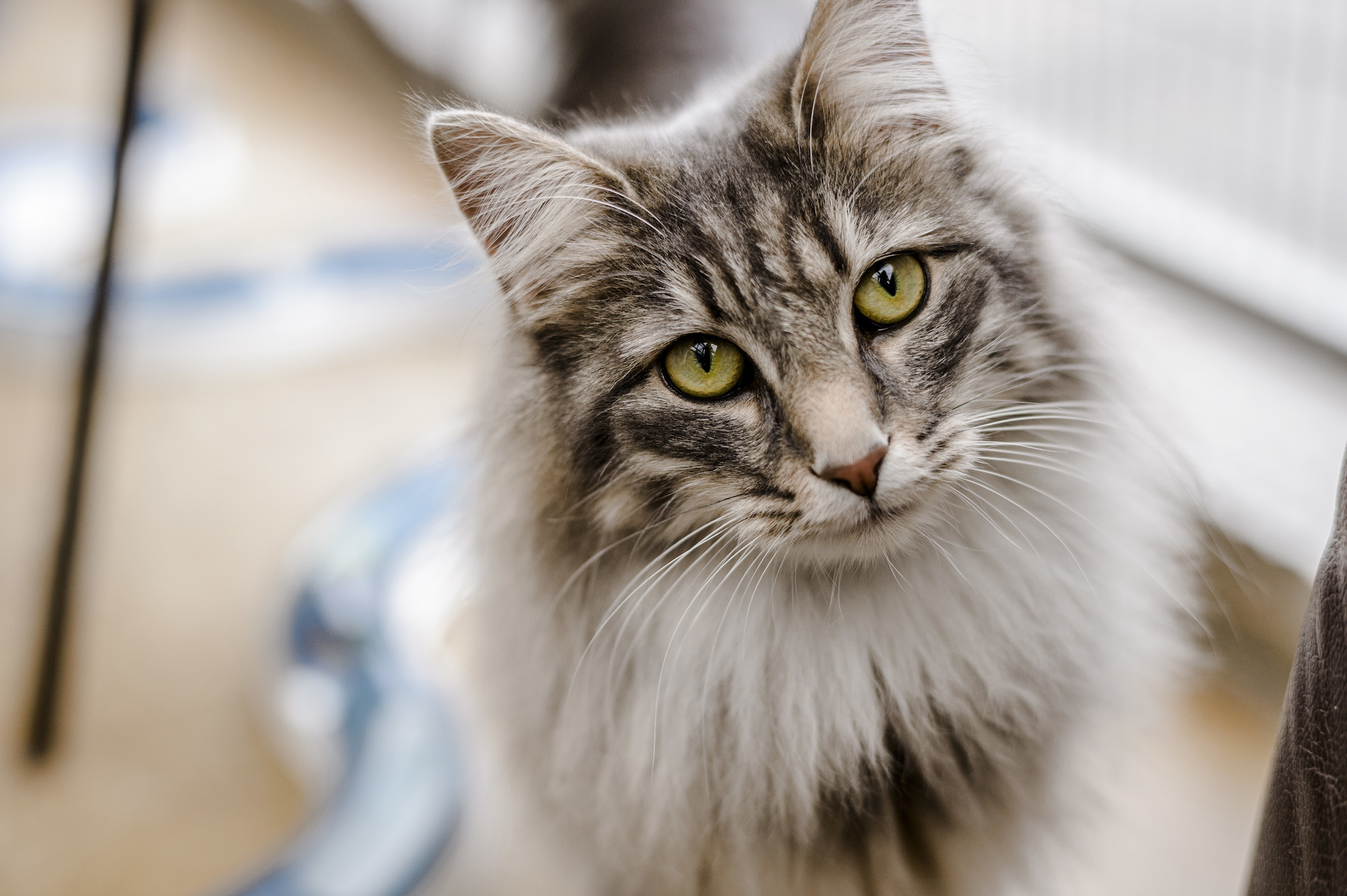 Read Carefully Before Choosing The Best Cat Litter For Your Lovely Cat