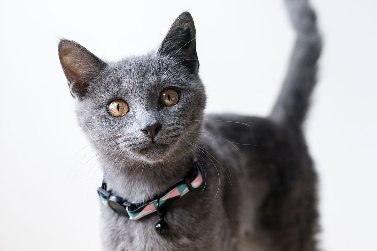 Tips on Selecting The Right Cattery For Your Loved Feline Friend