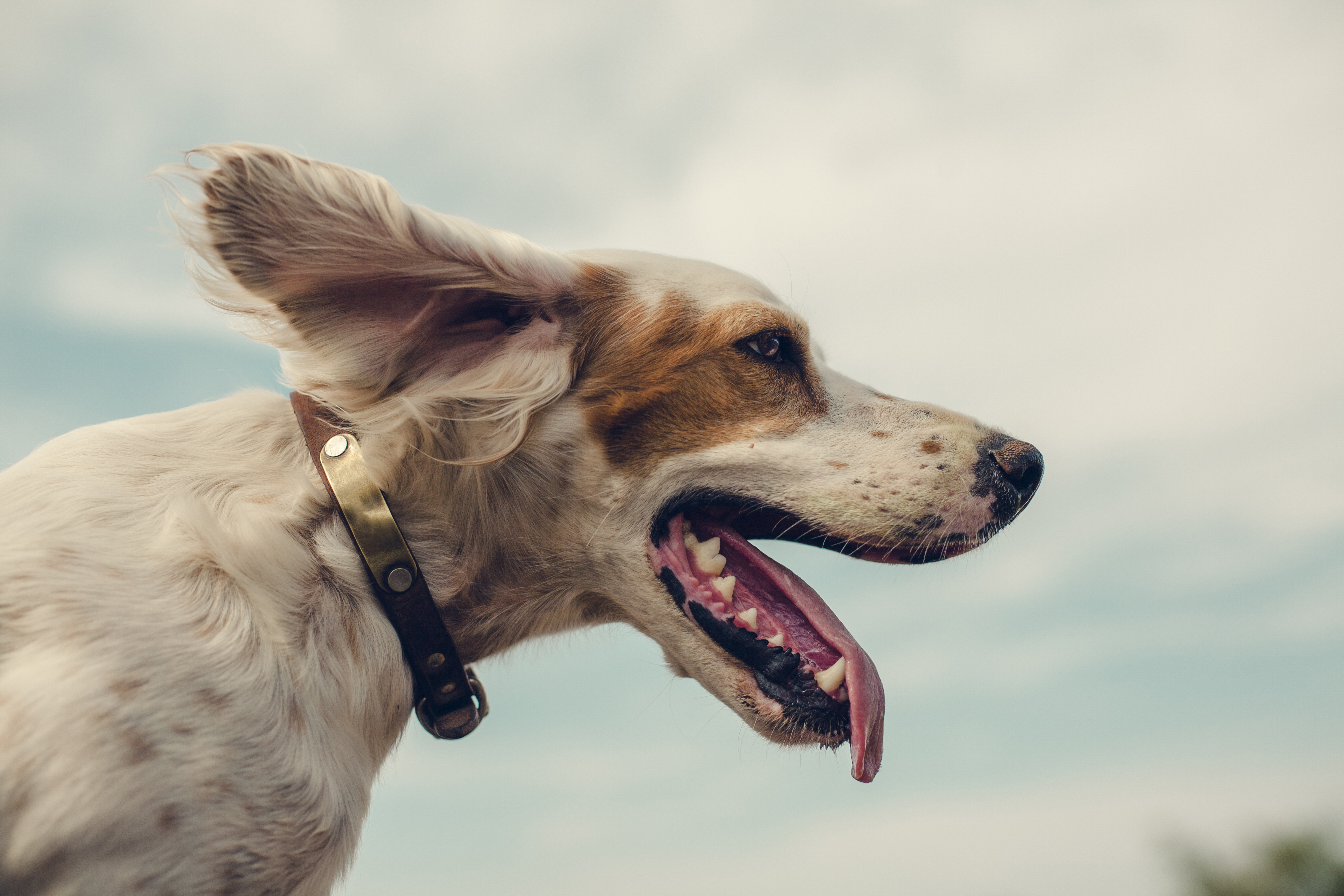 What Toy to Buy For Your Pet? Here's How You Can go About Buying One