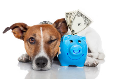 Taking Care of Your Pet Can Be Easy with Pet Insurance