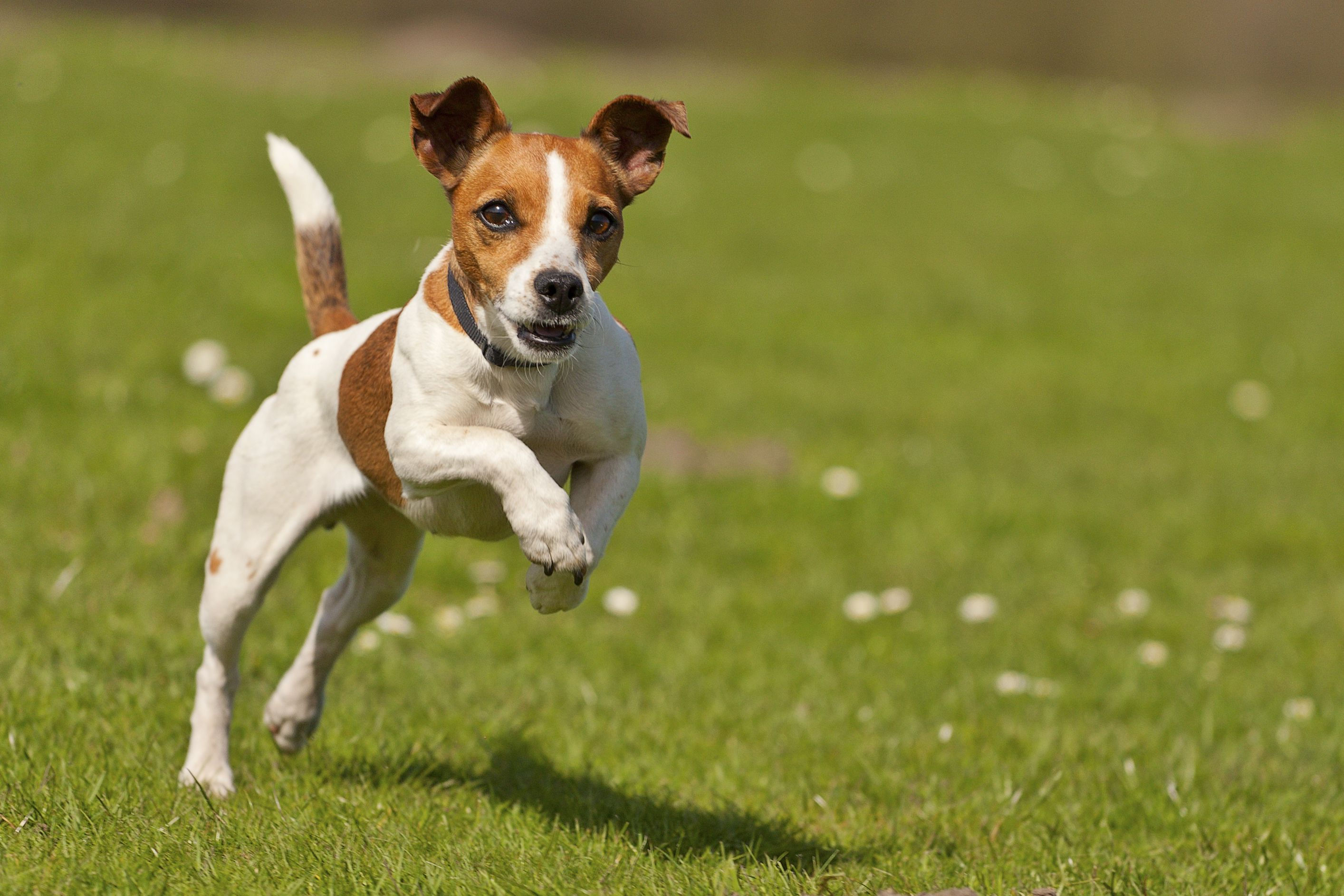 Why is Organic Pet Food Good For Your Pet?