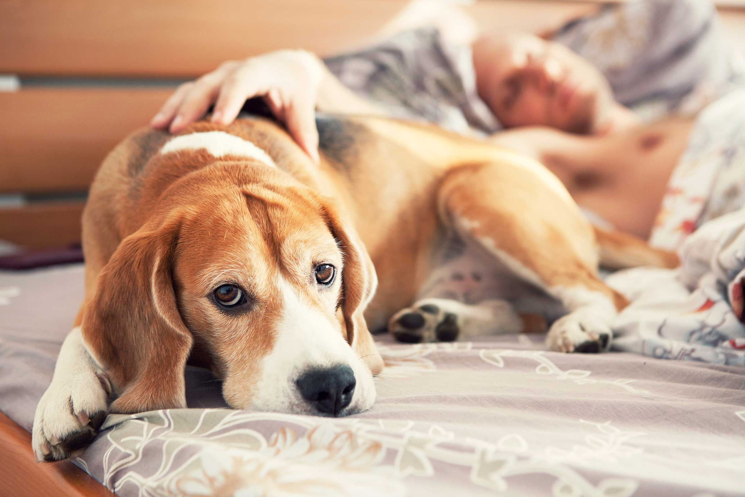 Ensuring Your Dog Maintains a Healthy Digestive System