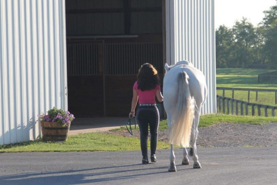 Having a Healthy and Clean Horse Barn