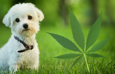 How CBD Oil Can Help Your Pet's Anxiety?