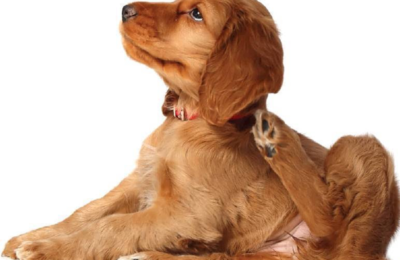 6 natural remedies to relieve the itching of dogs and cats