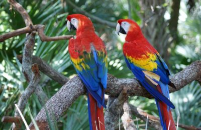 Parrots – Learn more About them – Feeding in Captivity