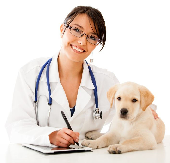 Five tips to find a good vet