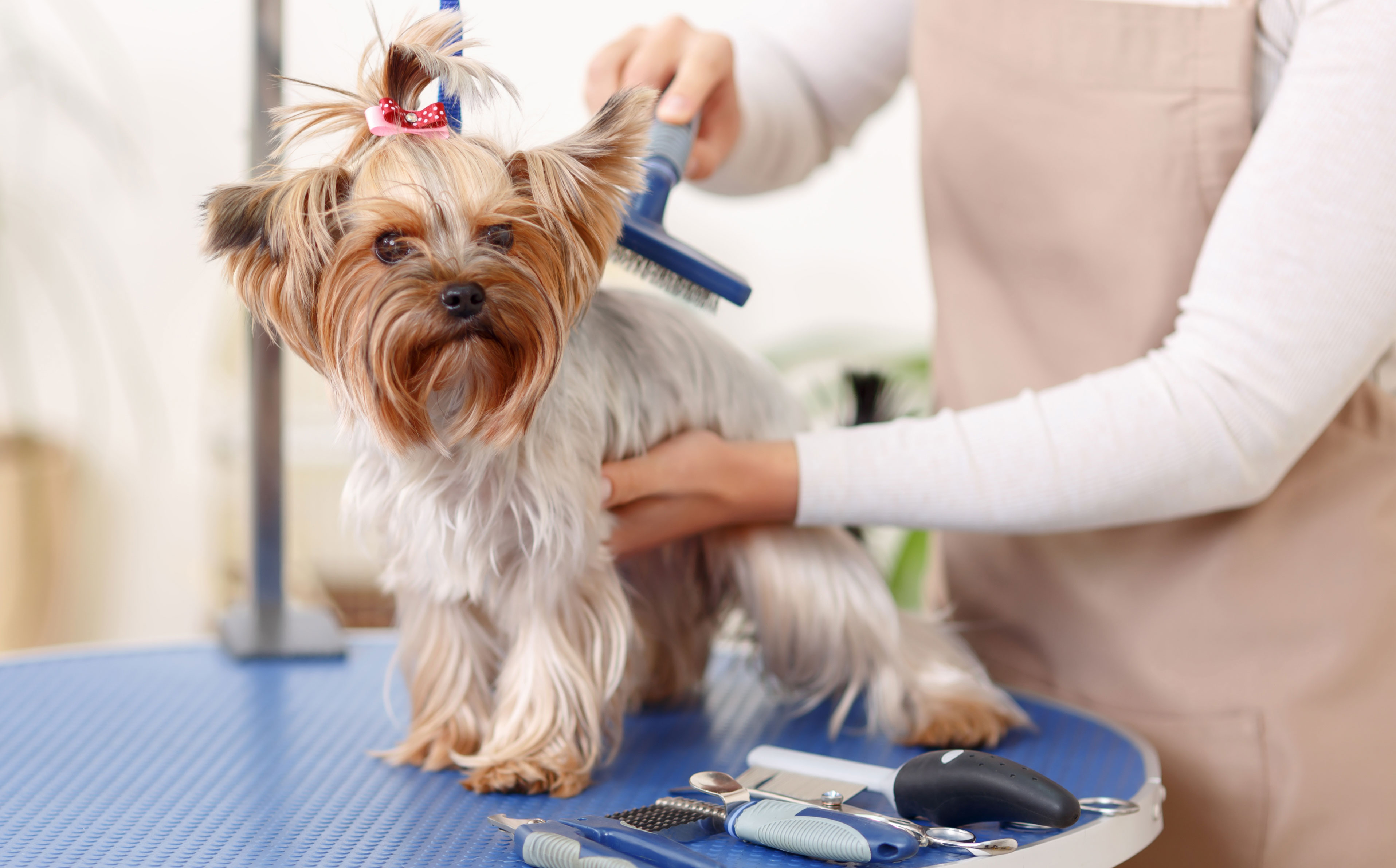 Image result for Top Tips For Dog Grooming