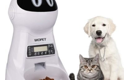Automatic cat food dispenser leave cat alone at home