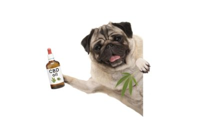 Benefits and Potential Side Effects of CBD for Dogs and Cats