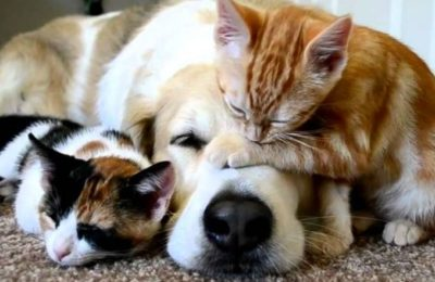 Pet Medicines: Who is the Best Buddy of Pets in Sickness