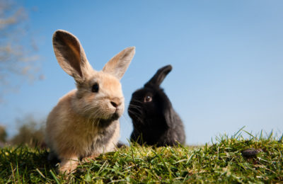 7 Top Tips For Owning A Rabbit