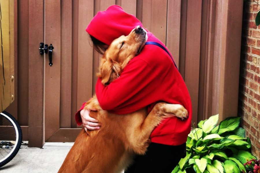 """""""6 things you need to do if you love your pet"""""""