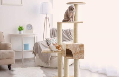 What features should you look for in a Cat Stand or tower?