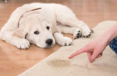 Dog's bad odour and stain cleaning agents