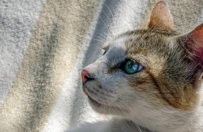 Feline Leukemia Virus (FeLV)