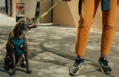 Hiring The Best Dog Walking Company