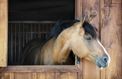How To Choose the Best Boarding Farm For My Horse