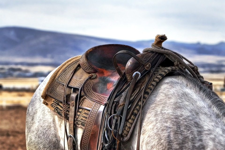 3 Things To Know Before Buying a Horse