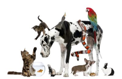 Popular Pets