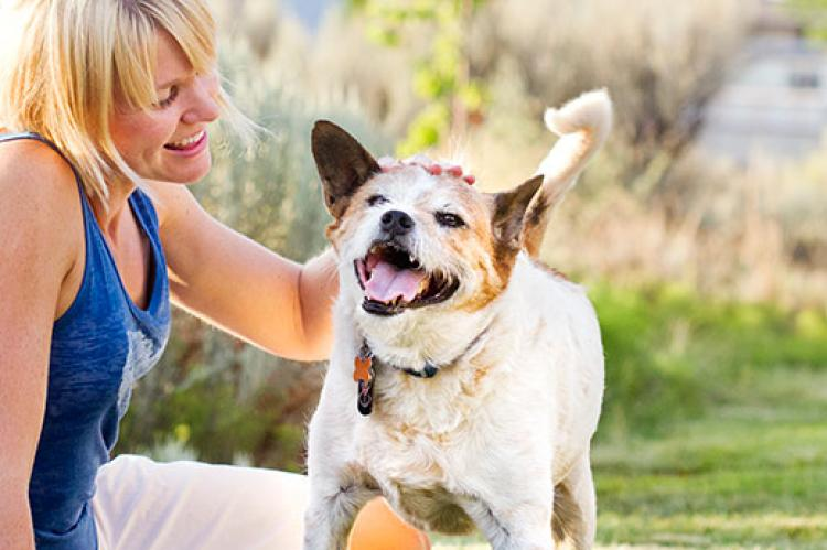 4 Things To Consider Selecting The Right Pet For Your Family