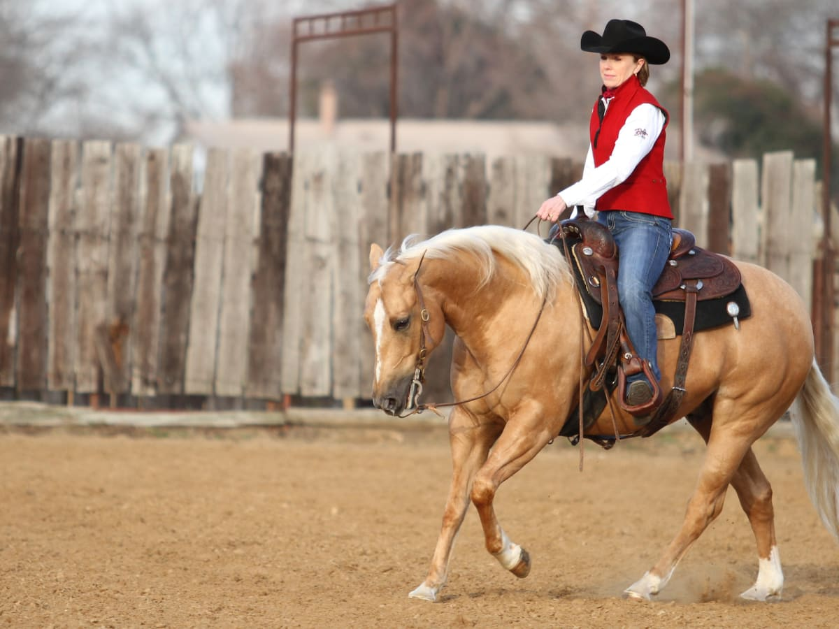 4 Tips To Become a Horseback Rider