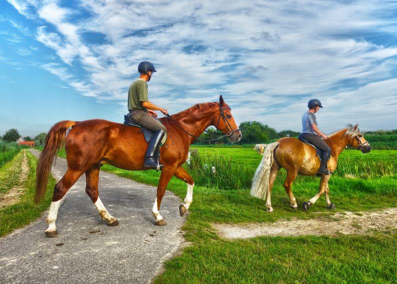 3 Beginner Tips for Horseback Riding