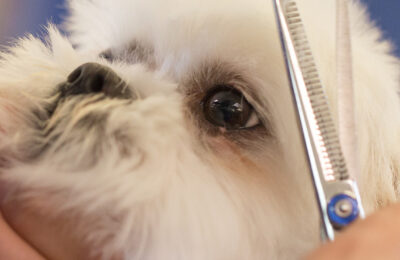 What is Pet Grooming- A Comprehensive Guide