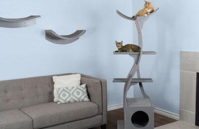 5 Ways To Keep Your Indoor Cat Happy